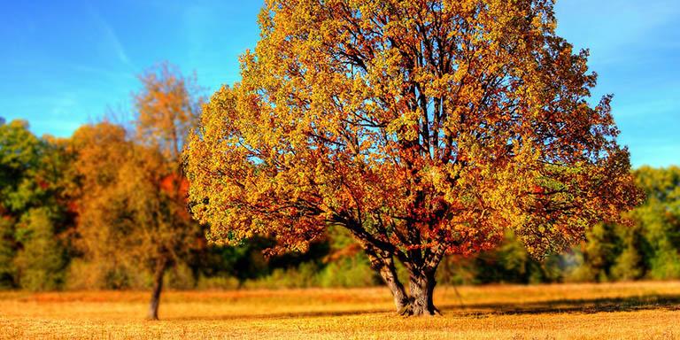 Акция Осенний хит на создание и раскрутку сайта